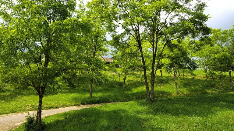 Nature - Domaine des Rigauds